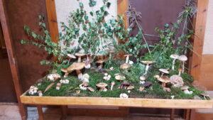 galerie Výstava hub