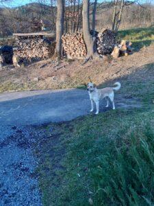 V obci Lužná se našel pes